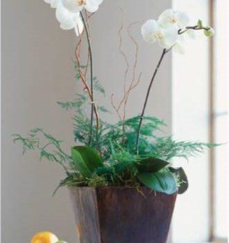 Virágnyelv